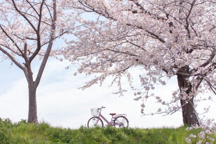 【おまけ】大人用の24インチ自転車を選んだら、ダメ?