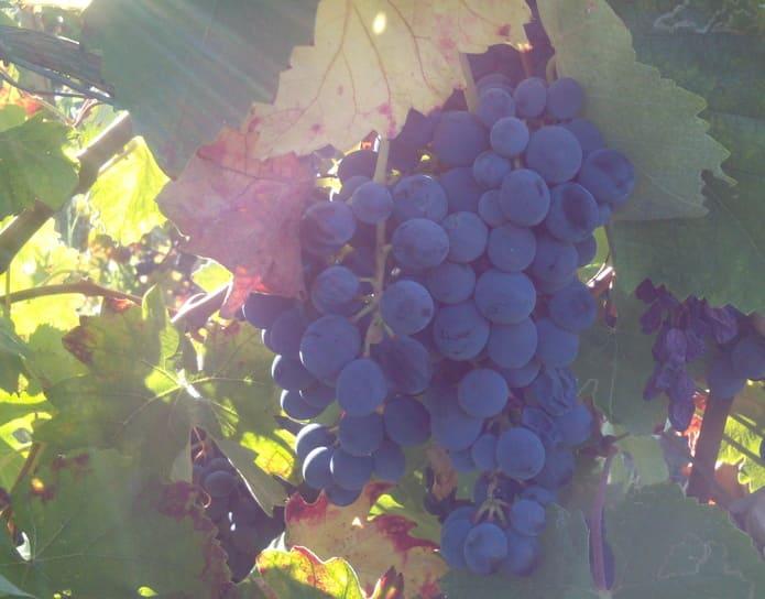 ワインステージは、ワインを嗜みながら